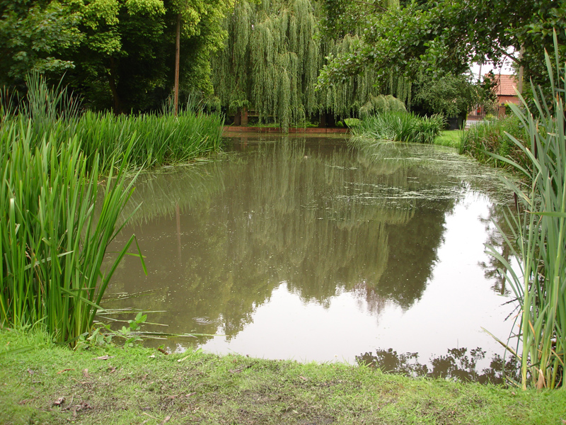 Duckweed Removal Case Study Pond And Lake Weeds
