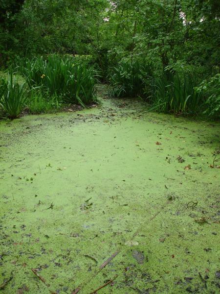 Pond Restoration Case Study Herts London South East