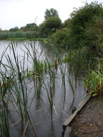 Erosion Defence Installation Pond And Lake Erosion