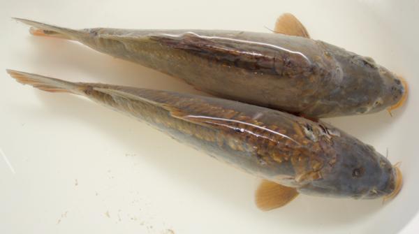 Fisheries Management Essex Fish Supply Amp Transport